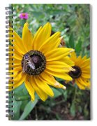 Fly On Rudbeckia Spiral Notebook