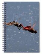Togetherness Fly United 7 Spiral Notebook