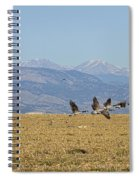 Flying Canadian Geese Colorado Rocky Mountains 1 Spiral Notebook
