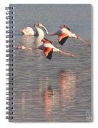 Flying Flamingos Spiral Notebook