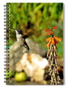 Flying Hummingbird Spiral Notebook