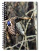 Flying Mallard Spiral Notebook