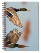 Skimming The Pond Through Cattails Spiral Notebook