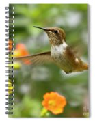 Flying Scintillant Hummingbird Spiral Notebook