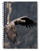 Flying Sea Eagle  Spiral Notebook