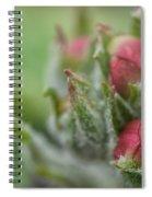 Fog Nourished Spiral Notebook