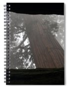 Foggy Morning Sequoias Spiral Notebook