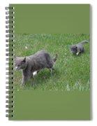 Follow Me Home Spiral Notebook
