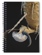 Foot Of A Bat Tick Sem Spiral Notebook