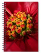 For Christmas Spiral Notebook