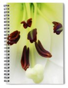 For The Love Of Lilies 1 Spiral Notebook