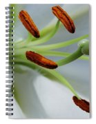 For The Love Of Lilies 8 Spiral Notebook