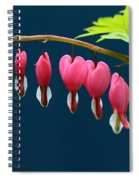 Bleeding Hearts For Your Love Spiral Notebook