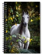 Forest Beauty Spiral Notebook
