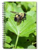 Forest Bee 7260 Spiral Notebook