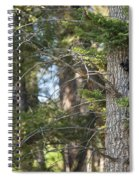 Forest Black Bear Cub Spiral Notebook