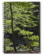 Forest Cathedral Spiral Notebook