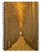 Forest Cathedral - Two Spiral Notebook
