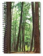 Forest In Early Morning, Wetlands Spiral Notebook