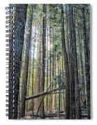 Forest Morning Spiral Notebook