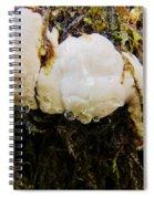 Forest Mushroom Trio Spiral Notebook