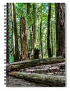 Forest Of Cathedral Grove Collection 2 Spiral Notebook