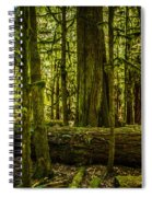 Forest Of Cathedral Grove Collection 3 Spiral Notebook