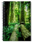 Forest Of Cathedral Grove Collection 9 Spiral Notebook