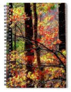 Color The Forest Spiral Notebook