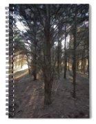 Forest Of Light Spiral Notebook