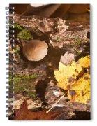 Forest Scene 6 Spiral Notebook