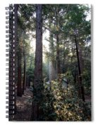 Forest Through The Trees Spiral Notebook