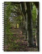 Forest Walk Hdr Spiral Notebook