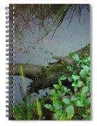 Forest Wetlands I Spiral Notebook