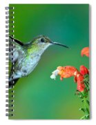 Fork-tailed Woodnymph Spiral Notebook