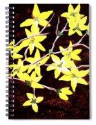 Forsythia Branches Spiral Notebook