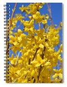 Forsythia On Blue Spiral Notebook