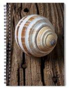 Found Sea Shell Spiral Notebook