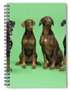 Four Dobermans Sitting Down Spiral Notebook