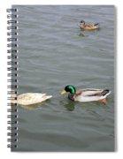 Four Ducks Spiral Notebook