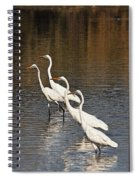 Four Egrets Fishing Spiral Notebook