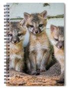 Four Fox Kits Spiral Notebook