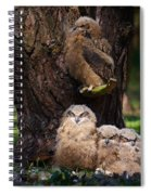 Four Owl Chicks In A Dark Forest Spiral Notebook