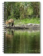 Fox At Water Hole Spiral Notebook