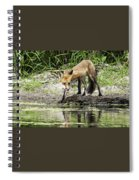 Fox Drink Spiral Notebook