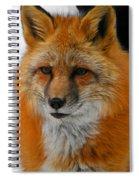 Fox Gaze Spiral Notebook
