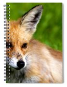 Fox Pup Spiral Notebook