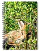 Red Fox Pup Hiding Spiral Notebook