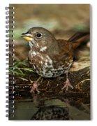 Fox Sparrow Drinking Spiral Notebook
