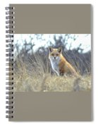 Fox Spiral Notebook